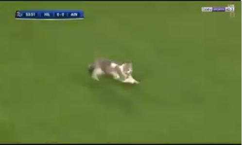 بالفيديو.. قطة تقتحم ملعب مباراة الهلال والعين الإماراتي