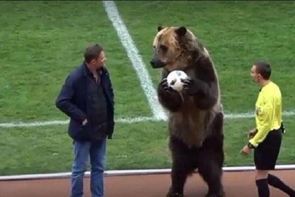 بالفيديو: في لقطة غريبة… دب يعطي إشارة انطلاق مباراة في الدوري الروسي!