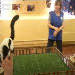 """بالفيديو.. """"حيوان"""" يتنبأ بفوز روسيا على مصر بالمونديال"""