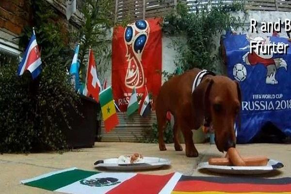"""كلب """"آر تو دي تو"""" يتوقع مباراة إنجلترا وتونس"""