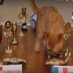 بالفيديو.. قط يتنبأ بالفائز في نهائي مونديال روسيا