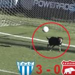 شاهد.. كلب يتصدى برأسه لفرصة هدف محقق أثناء مباراة في الأرجنتين